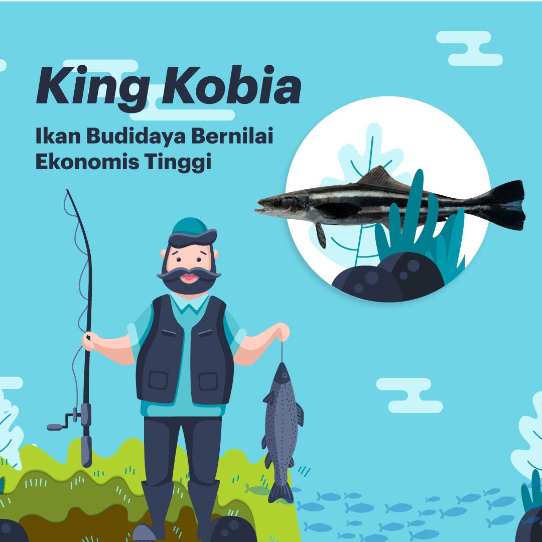 King Cobia: Varian Komoditas Ikan Budidaya Bernilai Ekonomis Tinggi-thum